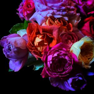 暗くすることで存在感アップ ダークローズの花束