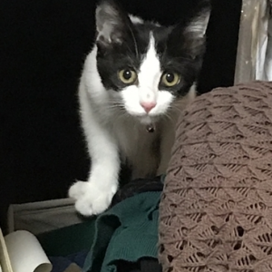 保護猫ちゃんを迎えて3日目!衝撃の事件が!