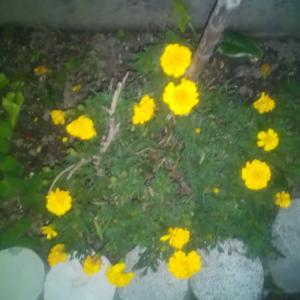 庭の花10/22