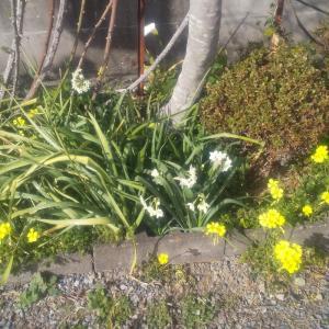 3月1日今日もいい天気