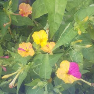 相変わらず庭の花デス!(●・w・●)ゝ