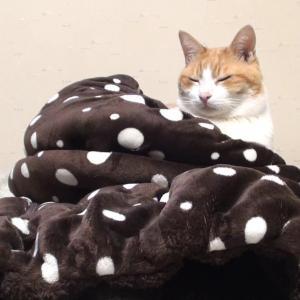 愛猫ちゃげとの写真