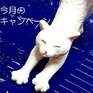 2020.10★今月のキャンペーン(シーモア)