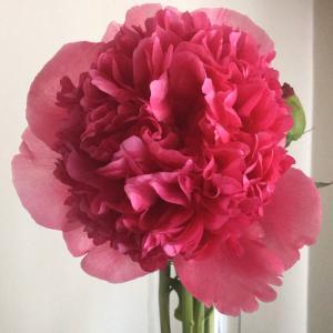 こんな時にはお花