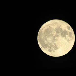 Flower Supermoon○ 5月7日は2020年最後のスーパームーン!