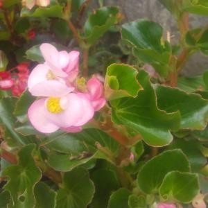 庭の花06/18