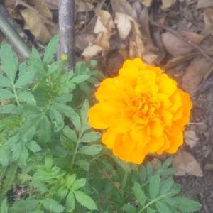 庭の花06/25 母もワクチン接種