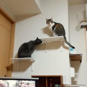 生活感のある「猫の家」