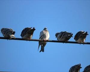 ベランダに鳩が巣を作ろうとしています!【いまできる対策法】