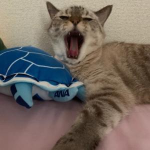 JALの行こうぜニッポン!