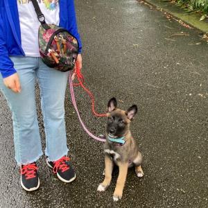 保護犬クロエのはじめてのお散歩