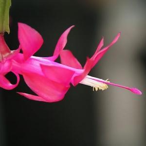 小さな自宅の庭の花
