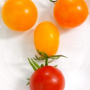 ミニトマト収穫♪ラウンドレッドは今季初!(107日目)
