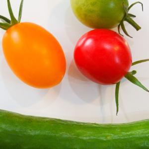 ちょっと久しぶりにミニきゅうりとミニトマト収穫♪