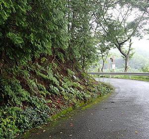 小雨降る荒神山671
