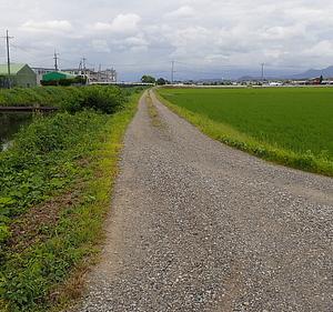午後の散歩道