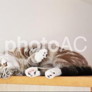 猫をモフりたい