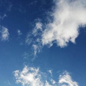 久々の青空の下、レンギョウの枝を雪から掘り出す。(12月23日)