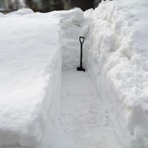 雪解けを早くするために、溝を掘る。(1月24日)