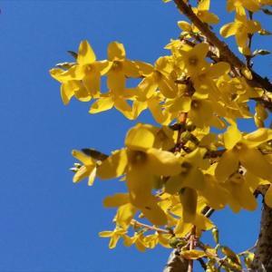 ねこちゃんの庭にもやっと春が来た(4月11日)