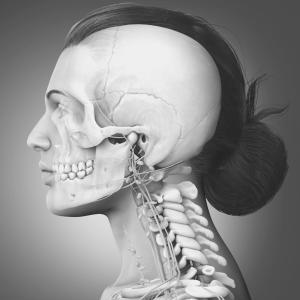 顔面骨の骨やせたるみを撃退する