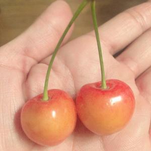 おススメのフルーツは…♡ふたごちゃん