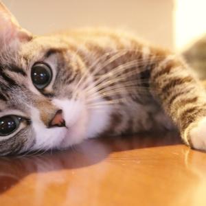 ペットの猫がトイレを失敗してしまう!原因と対処法