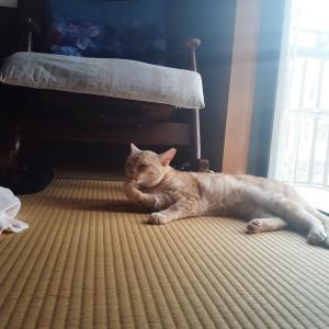 猫とゴロゴロ休日