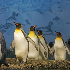 【映画記事】「ペンギン・ハイウェイ」を徹底的に解説