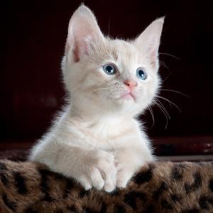 【映画記事】「泣きたい私は猫をかぶる」を「言葉の意味」から考えてみる