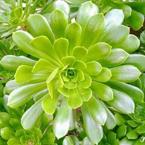 Jo's Style <27> Wild plants / Nature Plants 自然の植物
