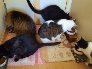 夜勤明けの日の猫たちとわたし。