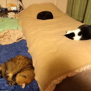 今日は猫たちがよく甘えに来る。そしてワールドトリガーな時間を満喫中。
