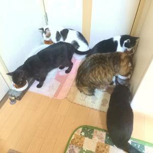 今日は朝から猫が毛玉を吐くトラブルに見舞われたけど、それ以外は・・・