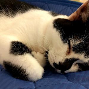 イオリさんの寝顔が素敵だった。