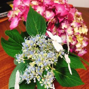 紫陽花の切り花って水揚げがむずかしい