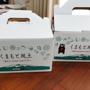 【リピート荒尾市返礼品レビュー】熊本県産ひとくちもぎたてみかんが届きました!