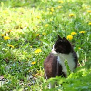 宮城県の「猫島」! 田代島