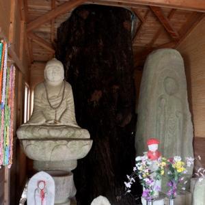 地蔵桜、宮城県の名のある桜 [川崎町ドライブ観光 #3]