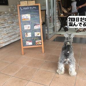 再びFARMER'S CAFE木更津