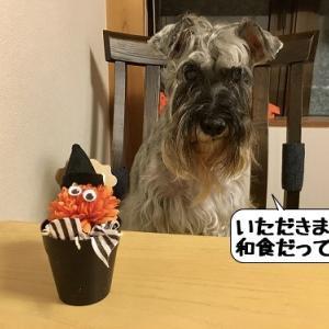 スペシャルドッグコース(和食)~湯わん