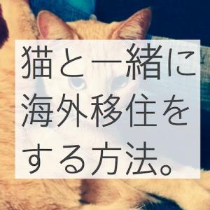 猫と一緒に海外移住!実際に起こったトラブルとその解決方法!