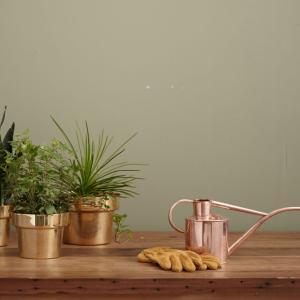 【観葉植物】室内やベランダで一人暮らしの初心者でも育てやすい100均で買える【おすすめ】