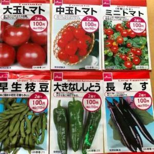 100均ダイソーの種でベランダ菜園プランターでトマトなどの栽培【夏野菜編】