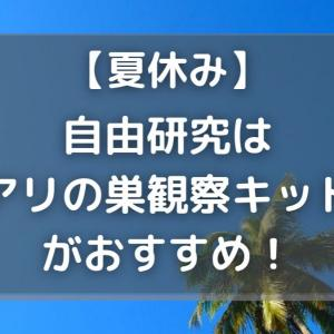 【夏休み】自由研究はアリの巣観察キットがおすすめ!【過ごし方】