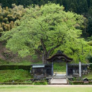 福井県の「石から読み解く歴史旅(観光)プラン」【日本遺産めぐり】