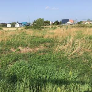 この中にスナイパーが隠れています。草むらに潜むオオジシギ 知床・斜里の野鳥
