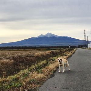 今日の斜里岳 2020年11月1日 斜里岳に更に雪が降る 知床連山はもう冬山