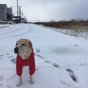2020年知床の冬 初雪は予想外にドカッと降った
