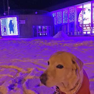 犬のカーシャはアジソン病発病から3年が経過しました